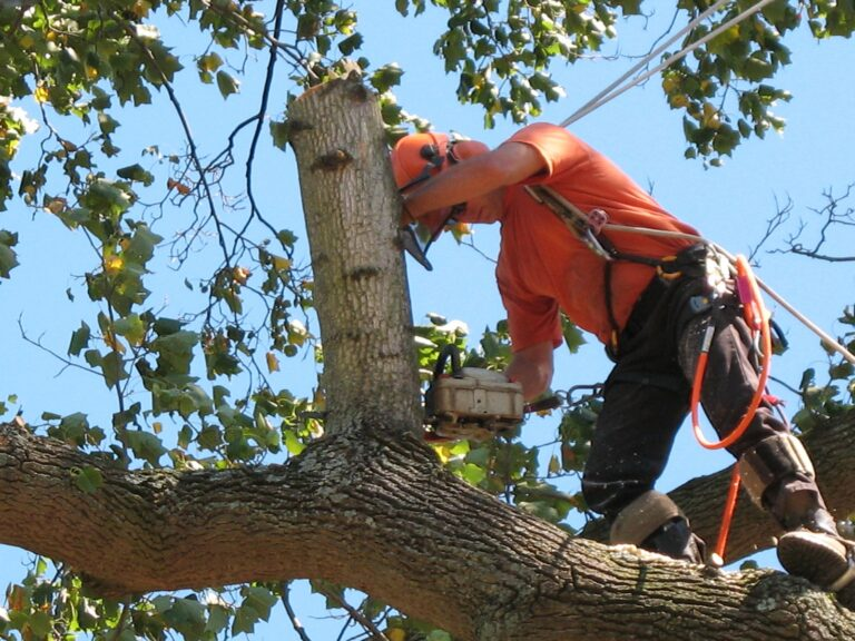 Tree removal in Jacksonville